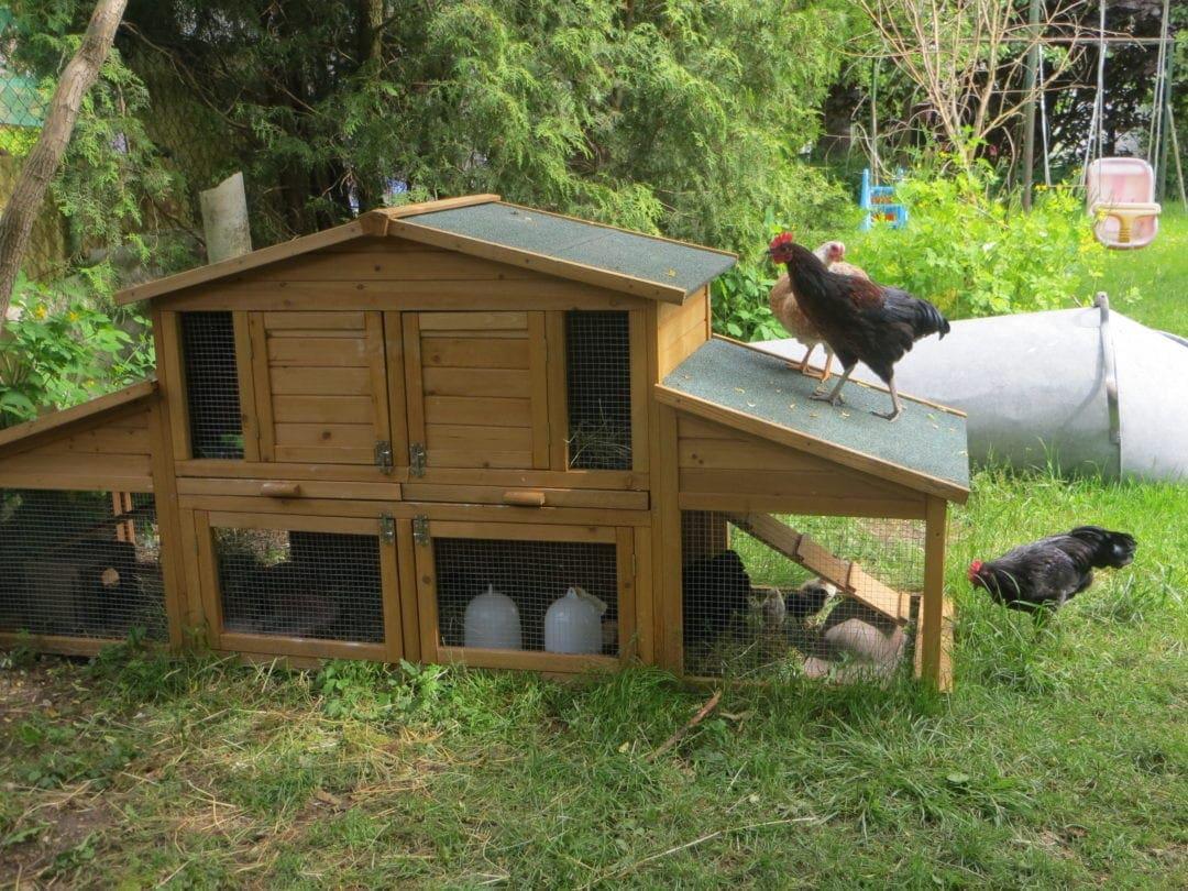 Doppeldecker Hühnerstall, eher Gluckenstall