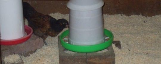 Die Einstreu im Hühnerstall