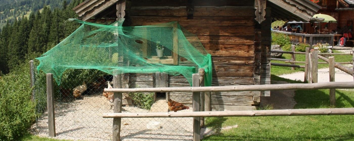 Ländlicher Hühnerstall mit Freilauf