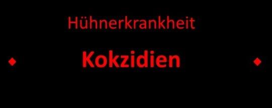 Kokzidien - Kükenruhr