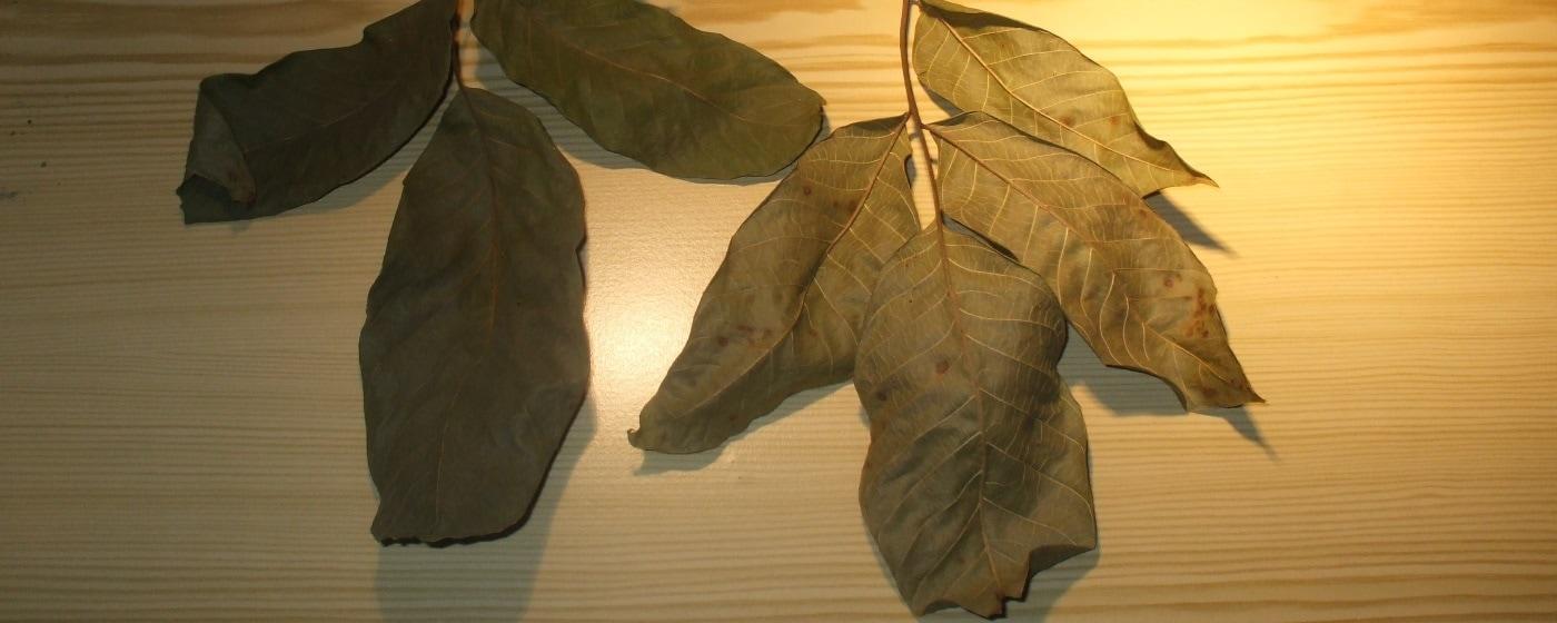 Walnussblätter als Einstreu