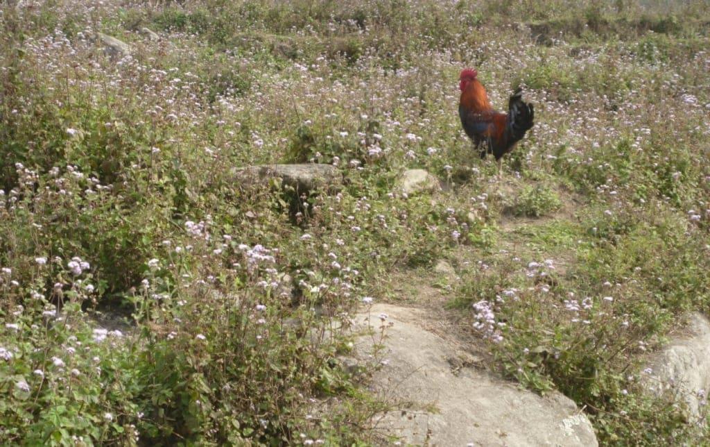 Unbegrenzter Auslauf für die Hühner