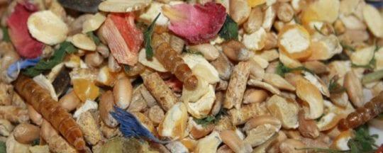 Bio Hühnerfutter für leckere Hühnereier