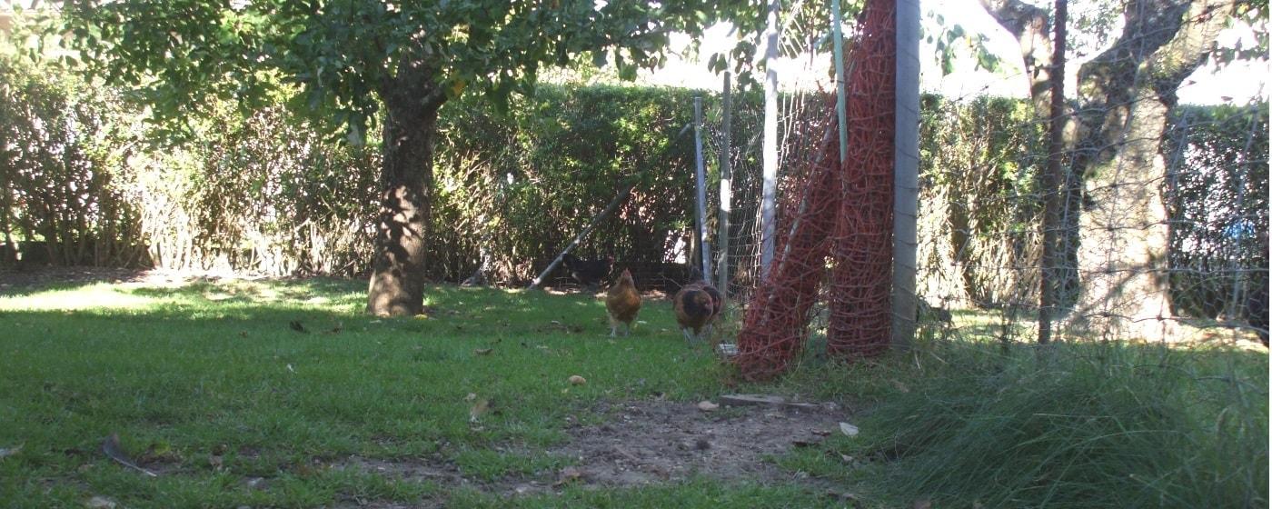 Hühnerzaun um den Auslauf der Hühner