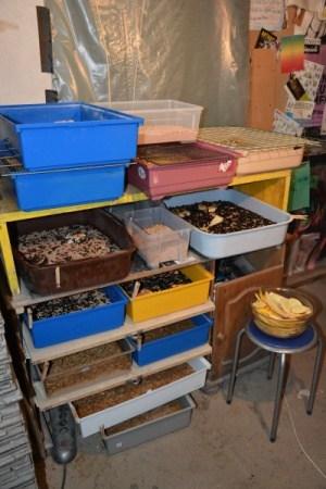 Anlage zum Mehlwürmer züchten