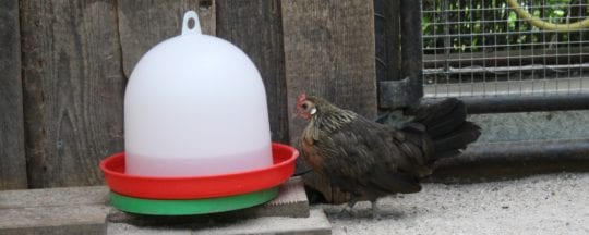 Geflügeltränke für Hühner