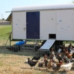 Hühnerstall mobil