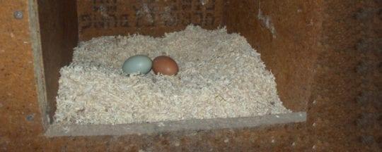 Legenest für Hühner