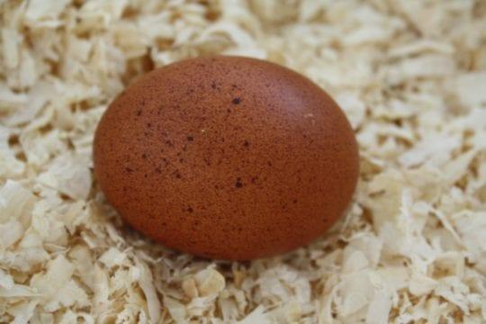 Maran Ei mit sprenkeln