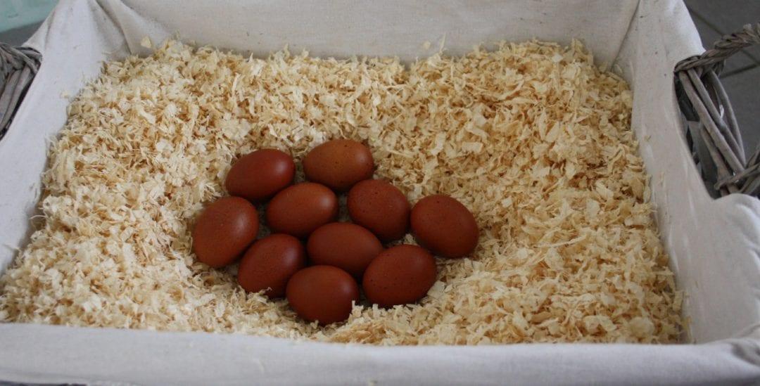 Hühnereier der Maran Hühner