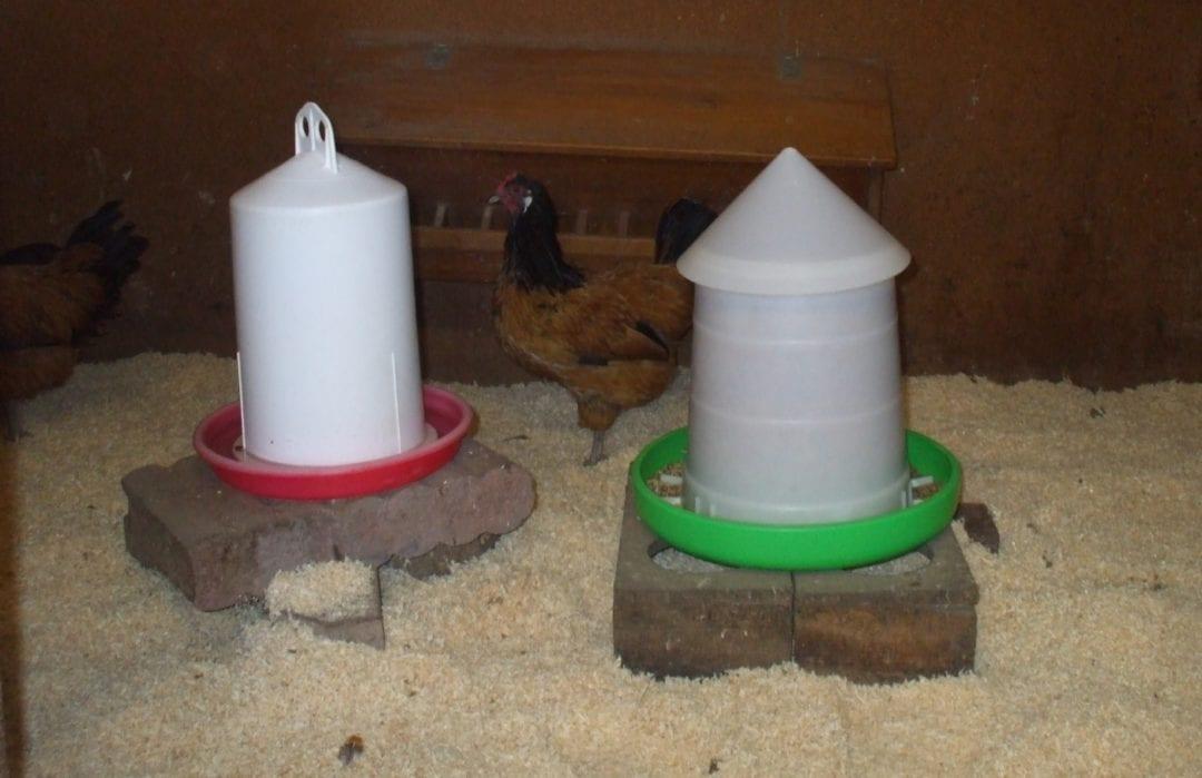 Hühner dürfen wieder in den Stall