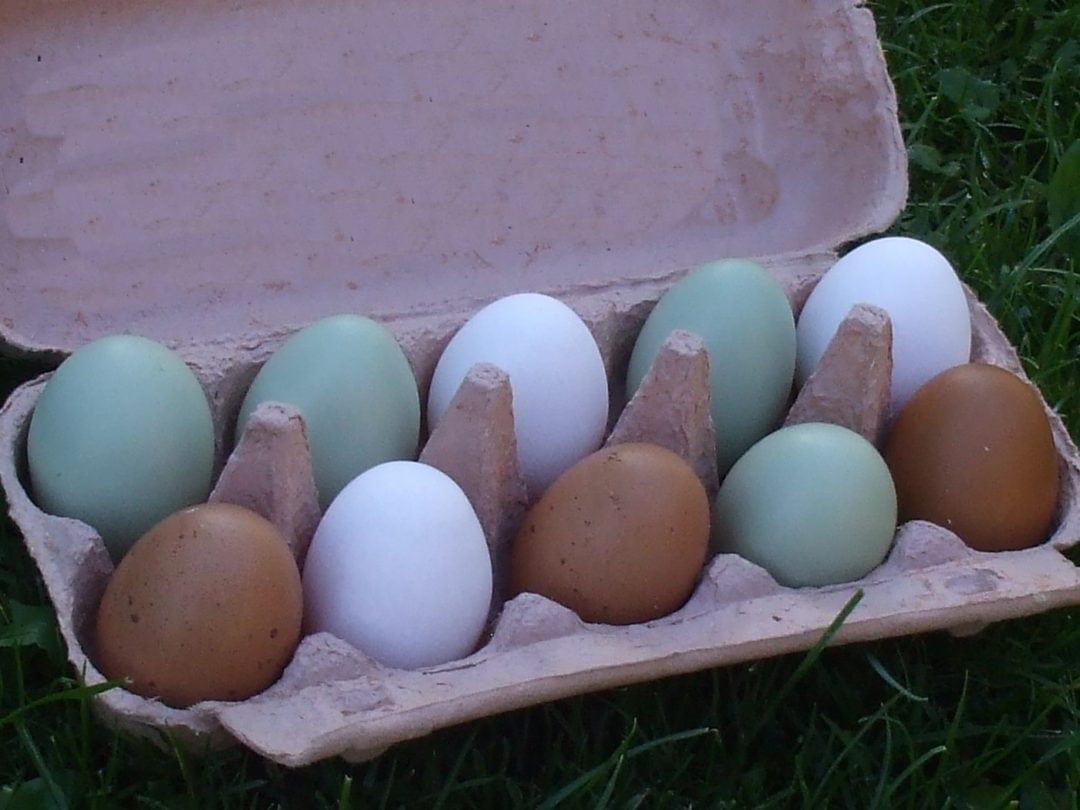 Hühnereier für den Nachbarn