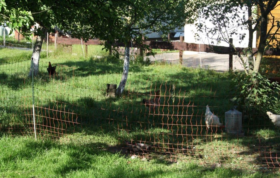 Der Geflügelnetz - Mobiler Auslauf für Hühner