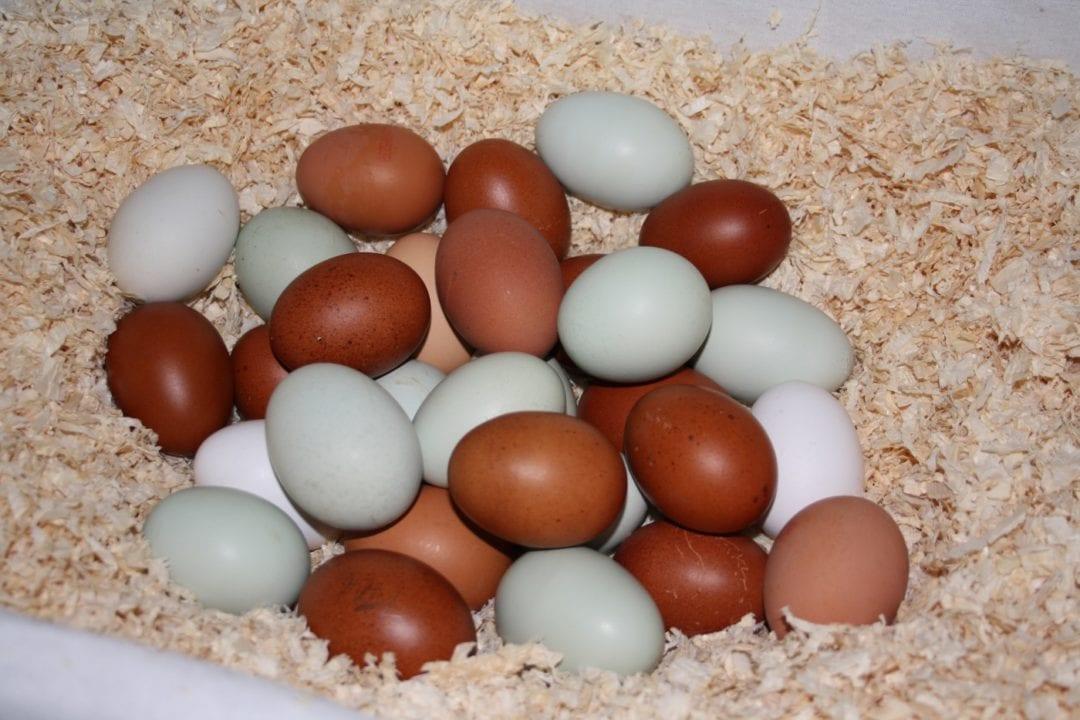 Wie Legen Hühner Eier