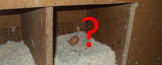 Warum legen Hühner Eier