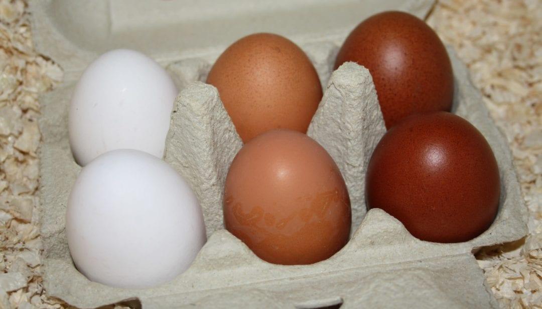 Eier verschlieder Rassen