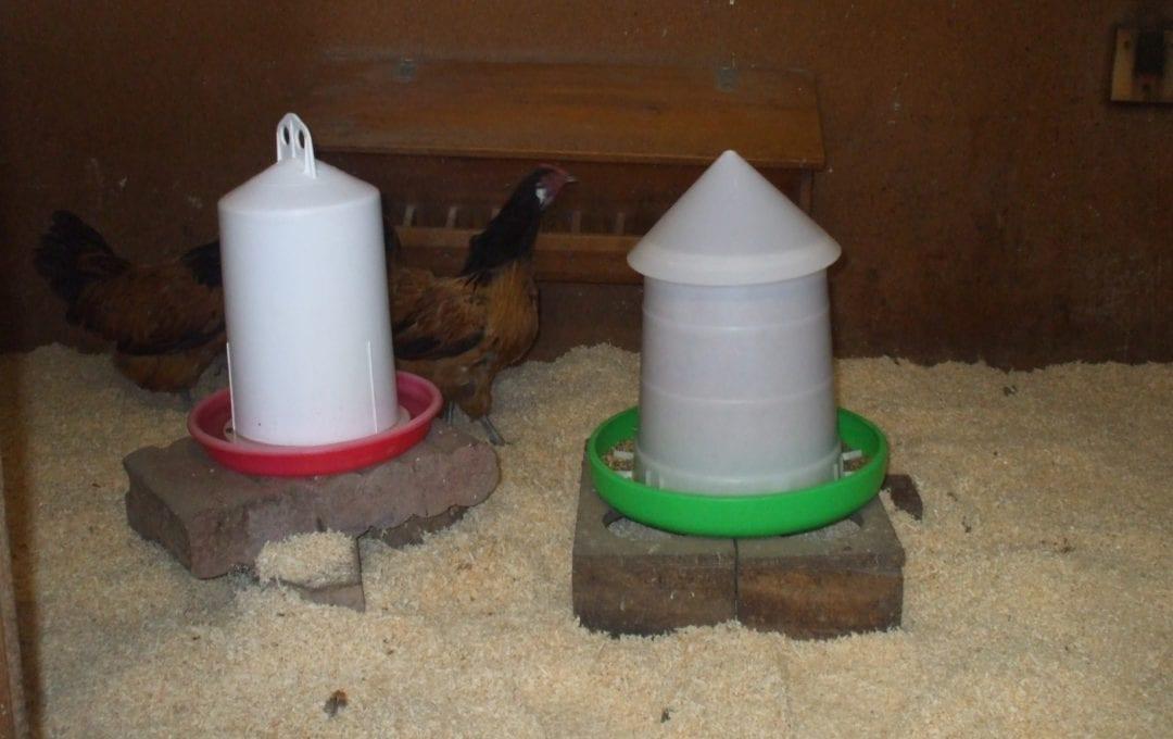 Hühner dürfen nach dem Desinfizieren wieder in den Hühnerstall