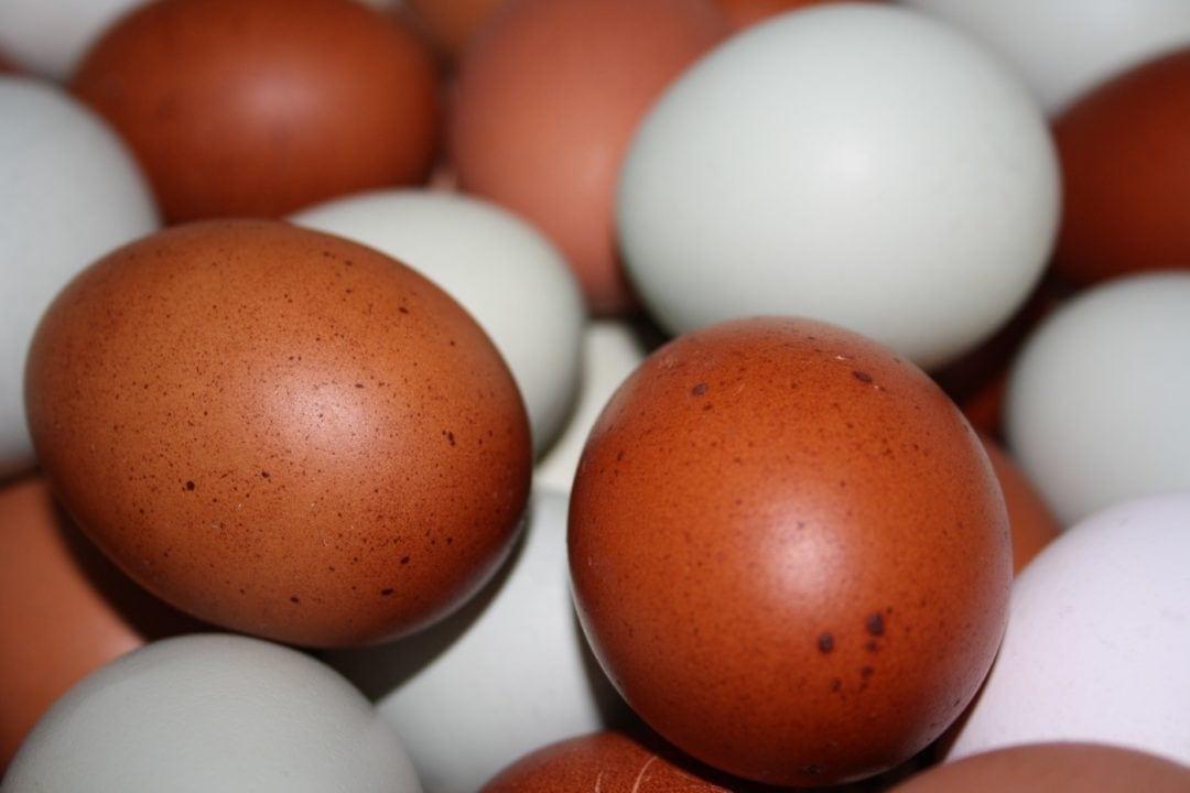 Eierfarbe bei Hühnerrassen