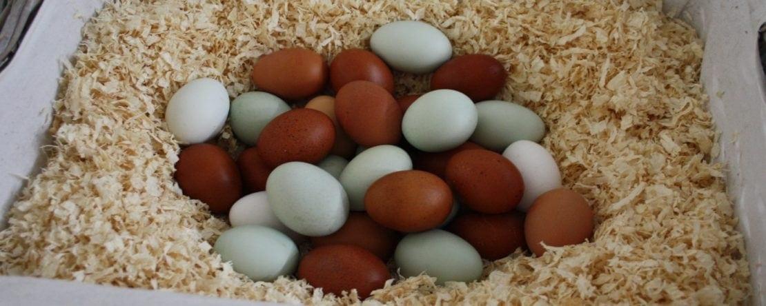 Hühnereier Farben