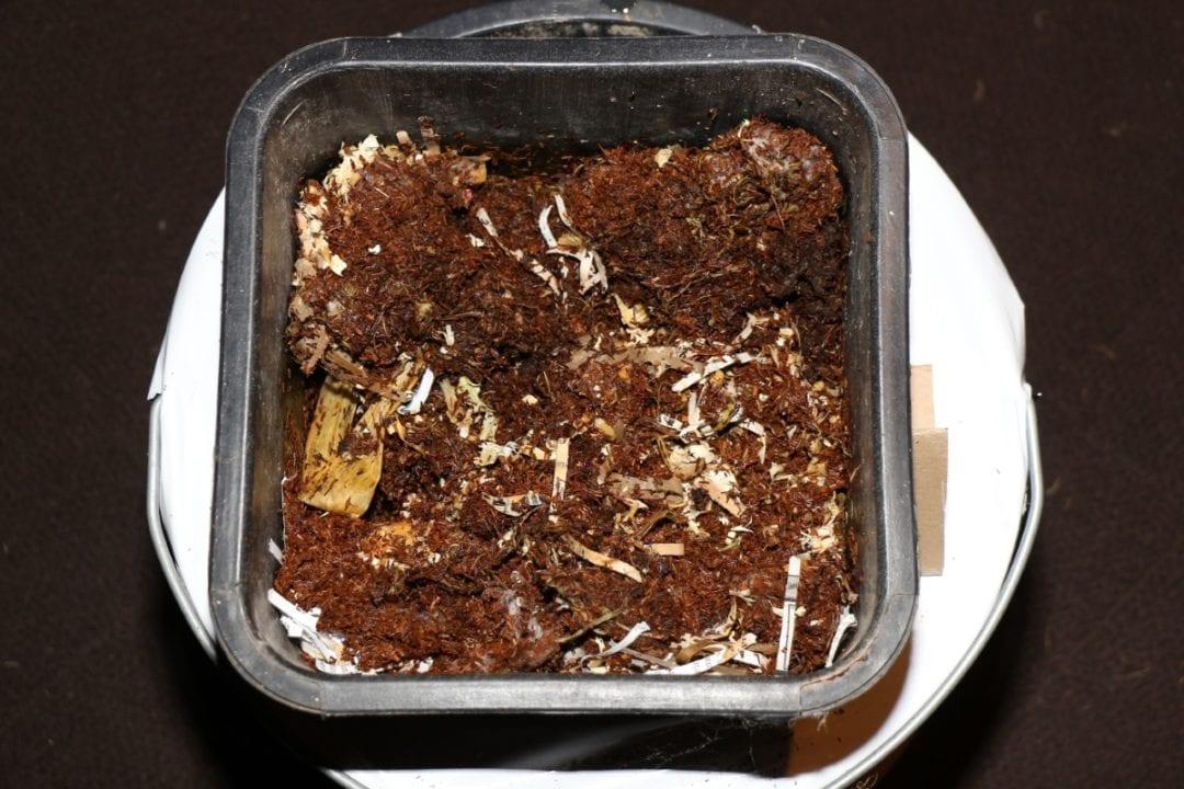 Bakterien und Pilze zersetzen