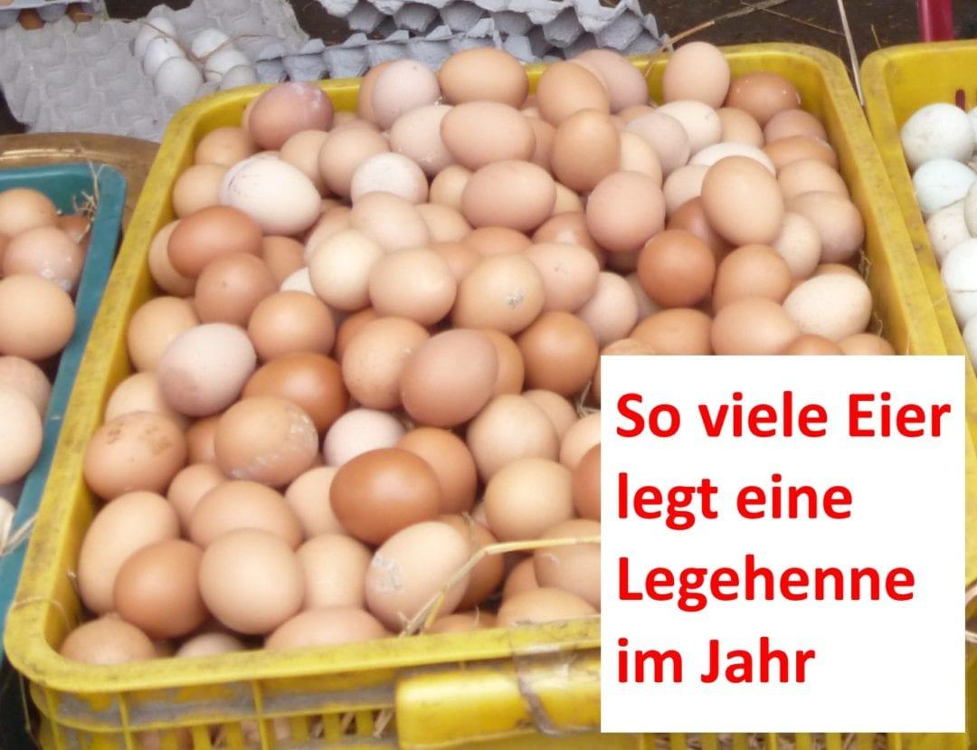 Viele Hühnereier