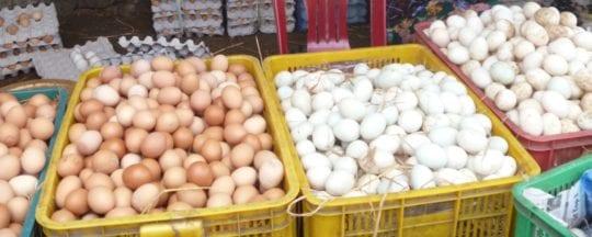 Wie viele Eier legt ein Huhn?