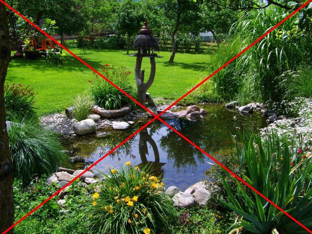 Harmonischer Gartenteich ohne Enten