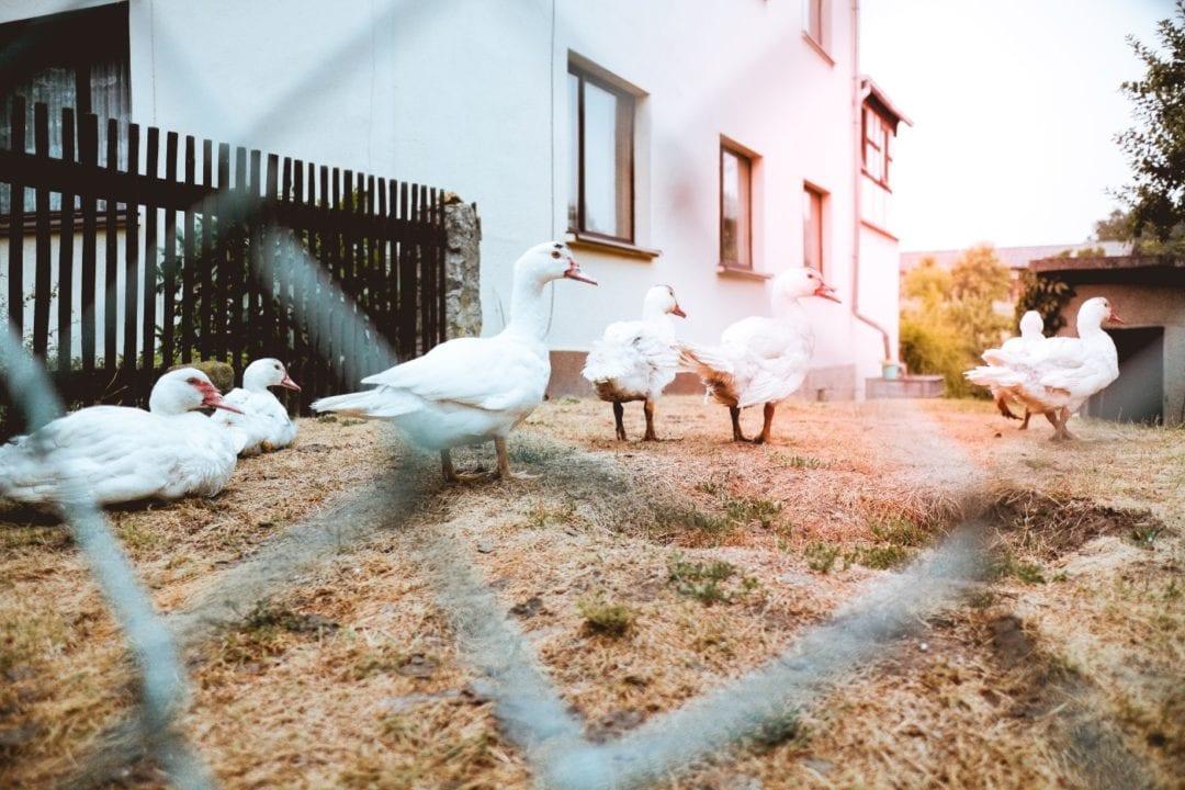 Idealer Standort für den Stall der Enten