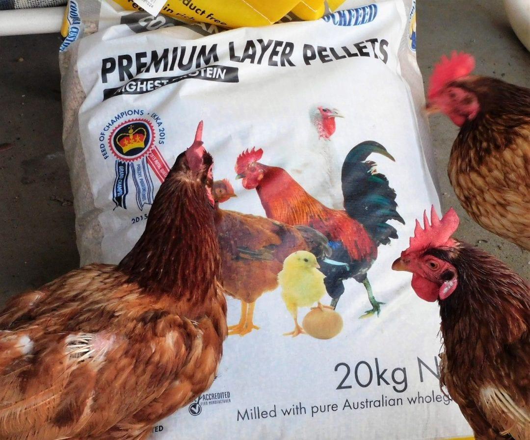 Den Hühnern Futter geben