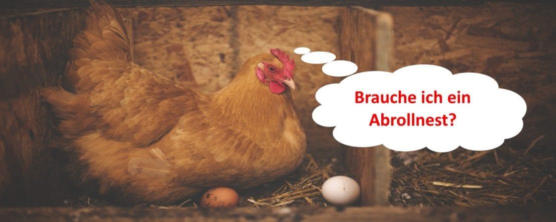 Abrollnest für saubere Hühnereier