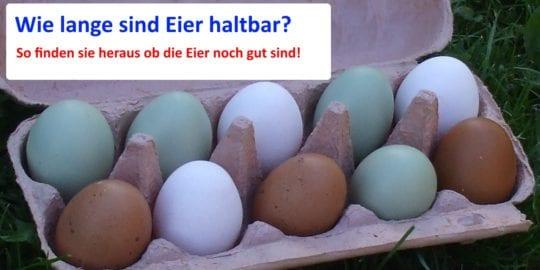 Wie lange sind Eier haltbar? - Praktische Tipps und Eiertest