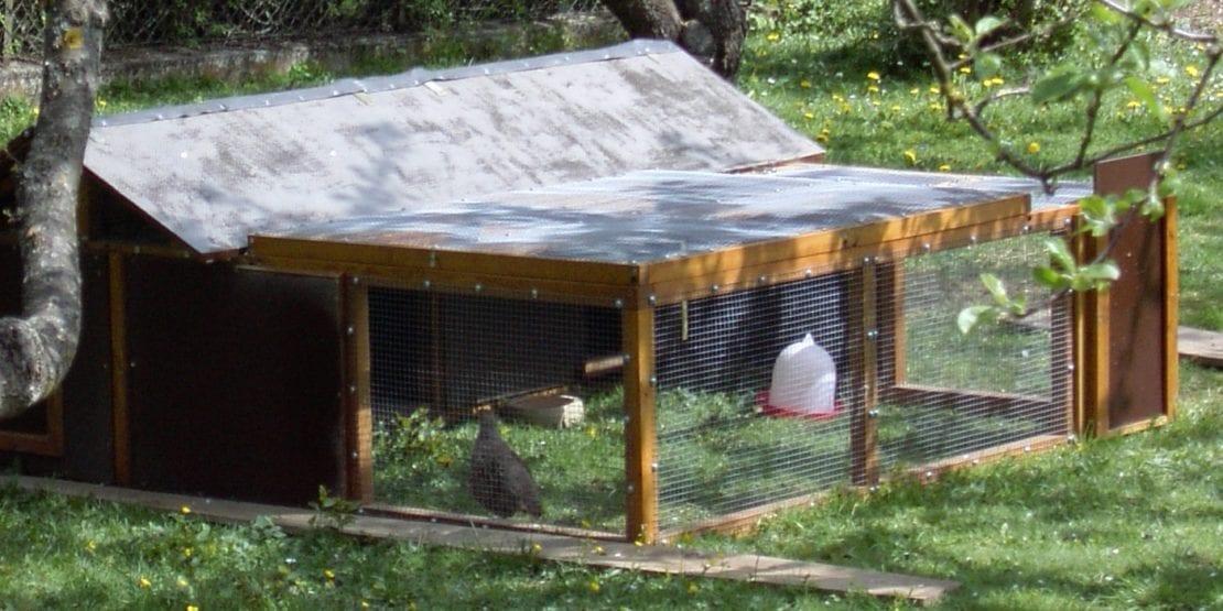 Rebhühner halten