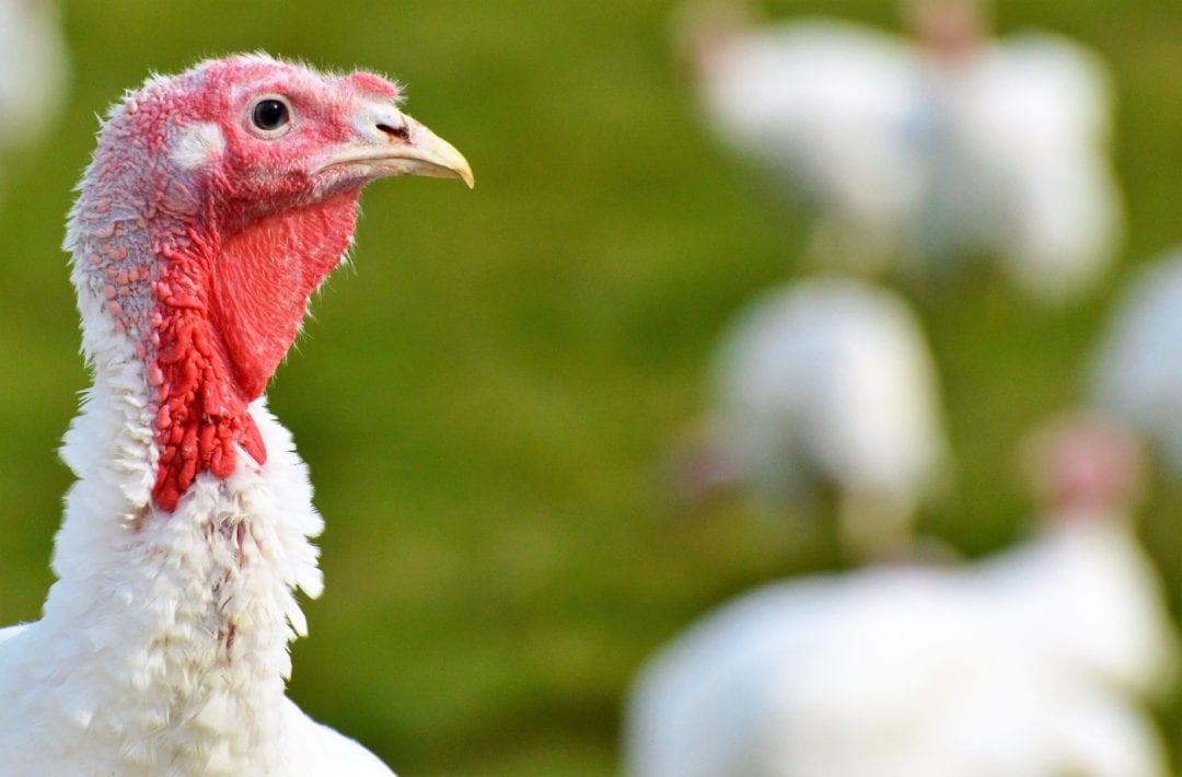 Ausreichend Platz für Hühner und Puten